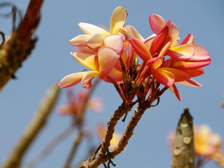 TB070655-Somba-region-flora.jpg