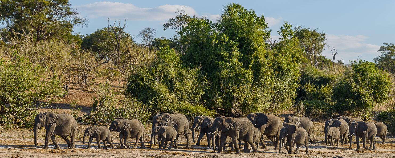 ZA131709-A-herd-of-Elephants.jpg