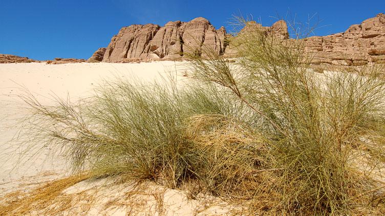 EG05033-Dune-and-grass.jpg