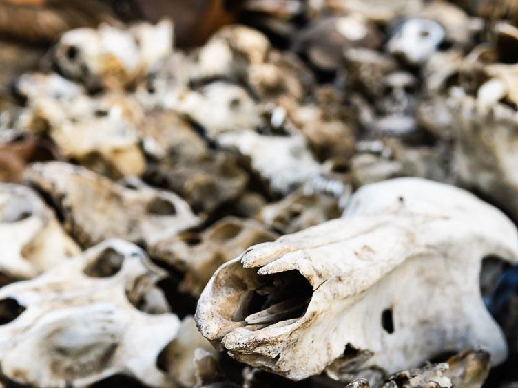 TB070036E-A-pile-of-skulls-at-the-Lome-Fetish-market.jpg