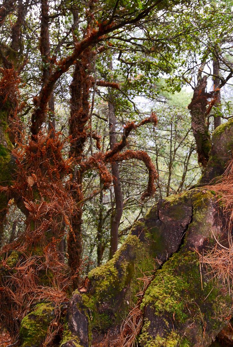 SB06301LB-Alpine-forest-near-Thimphu.jpg