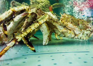 NO140045E-Bergen-Crabs-at-the-fish-market.jpg